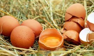 Cobardes y gallinas caso práctico